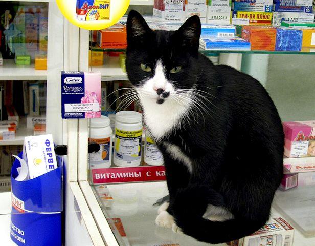 здоровье кошек Если кошка заболела
