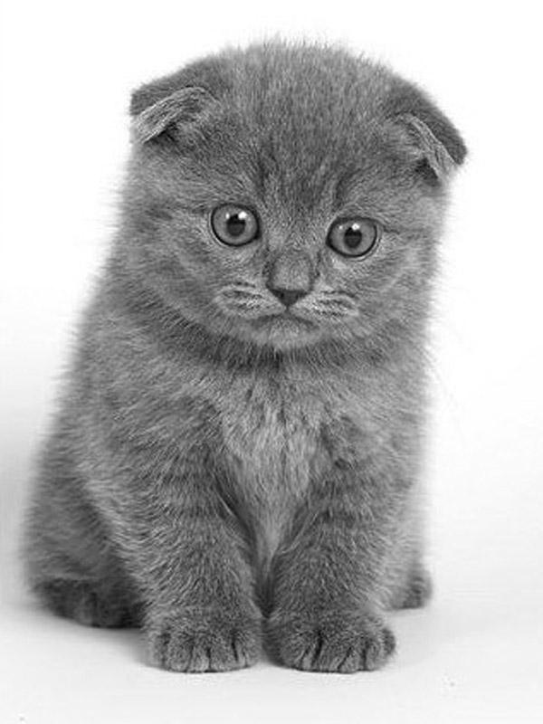 породистых котов и кошек