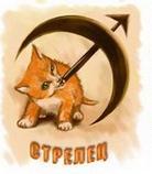 Гороскоп для стрельца кот